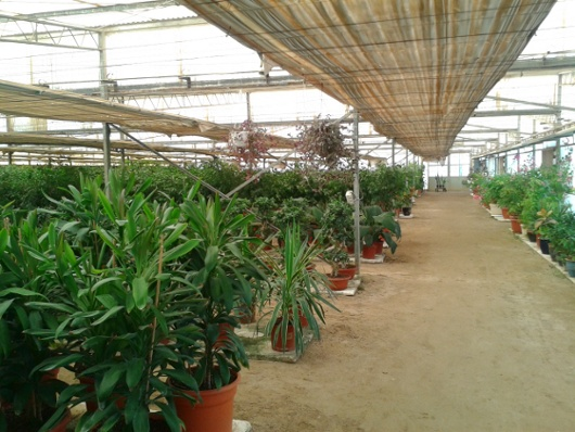 Qatar Foundation Plant Nursery